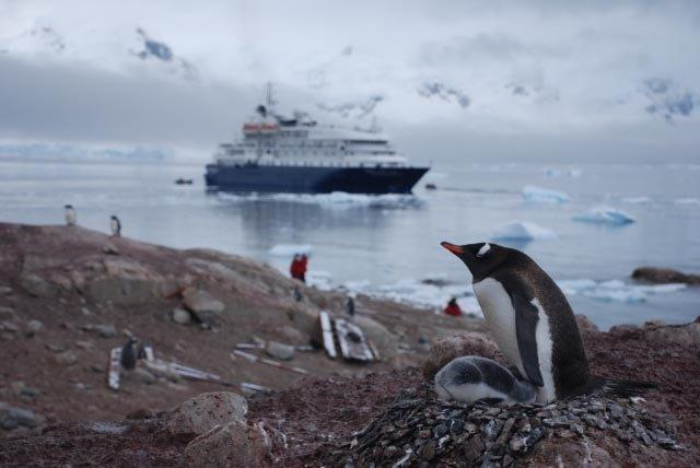 Dick-Pace-Antartica-Penguins-and-Ship-Photo