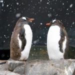 Dick Pace Adventures Penguins